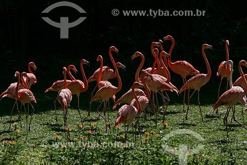 Assunto: Vista de Flamingos / Local: Rio de Janeiro (RJ) - Brasil / Data: 11/2013