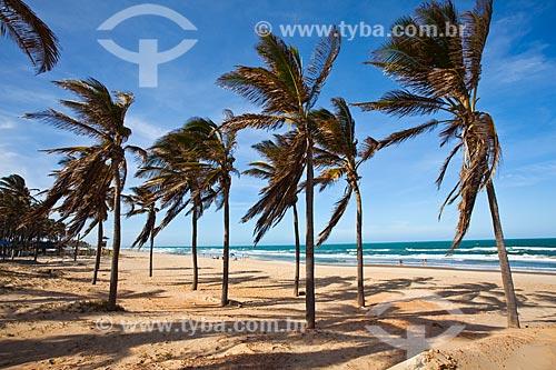 Assunto: Coqueiral na Praia do Futuro / Local: Fortaleza - Ceará (CE) - Brasil / Data: 11/2013