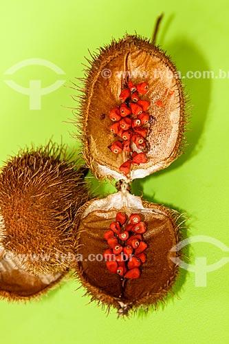 Assunto: Sementes de urucum ainda na fruto / Local: Porto Velho - Rondônia (RO) - Brasil / Data: 07/2010