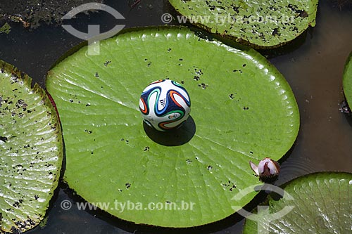 Assunto: Adidas Brazuca - bola de futebol oficial da Copa do Mundo FIFA de 2014 - sobre vitória-régia (Victoria amazonica) / Local: Amazonas (AM) - Brasil / Data: 01/2014
