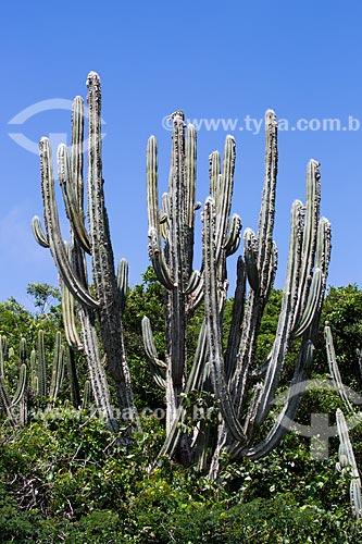 Assunto: Cacto Pilosocereus ulei - cacto característico da Caatinga Fluminense também conhecida como estepe arbórea aberta - no Morro do Forno / Local: Arraial do Cabo - Rio de Janeiro (RJ) - Brasil / Data: 01/2014