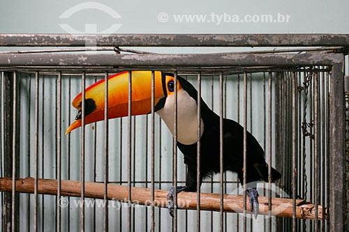 Assunto: Centro de Triagem de Animais Silvestres do IBAMA - CETAS / Local: Seropédica - Rio de Janeiro (RJ) - Brasil / Data: 01/2010