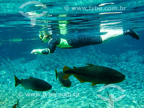 Assunto: Turista nadando junto aos peixes / Local: Bonito - Mato Grosso do Sul (MS) - Brasil / Data: 04/2008