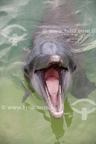 Assunto: Golfinho-nariz-de-garrafa (Tursiops truncatus) no Oceano Atlântico / Local: Bahamas - América Central / Data: 06/2013