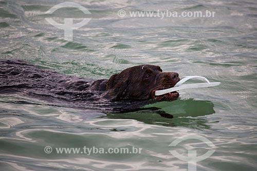 Assunto: Cachorro na Praia da Urca / Local: Urca - Rio de Janeiro (RJ) - Brasil / Data: 02/2014