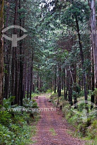 Assunto: Estrada do Morro do Dedão no Parque das Sequóias / Local: Canela - Rio Grande do Sul (RS) - Brasil / Data: 02/2014