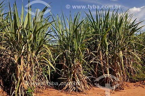 Assunto: Plantação de Cana-de-açúcar / Local: São Simão - Goiás (GO) - Brasil / Data: 02/2014