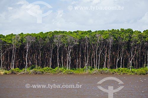 Assunto: Manguezal na margem do Rio Preguiças / Local: Barreirinhas - Maranhão (MA) - Brasil / Data: 06/2013