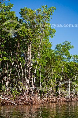 Assunto: Vegetação de mangue conhecida como Mangue-branco (Laguncularia racemosa) - Foz do Rio Preguiças / Local: Barreirinhas - Maranhão (MA) - Brasil / Data: 06/2013