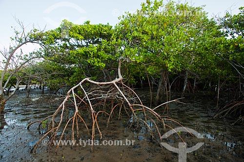 Assunto: Vegetação de mangue conhecida como Mangue-vermelho (Rhizophora mangle) - Foz do Rio Preguiças / Local: Barreirinhas - Maranhão (MA) - Brasil / Data: 06/2013
