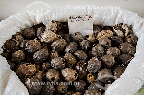 Assunto: Buchinha ou cabacinha vendida no Mercado Central -  Luffa operculata / Local: São Luís - Maranhão (MA) - Brasil / Data: 07/2012