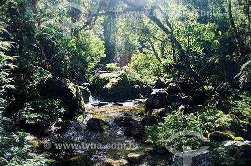 Assunto: Rio Bonfim na trilha de acesso ao Pico do Glória - Parque Nacional da Serra dos Órgãos / Local: Petrópolis - Rio de Janeiro (RJ) - Brasil / Data: 04/2014