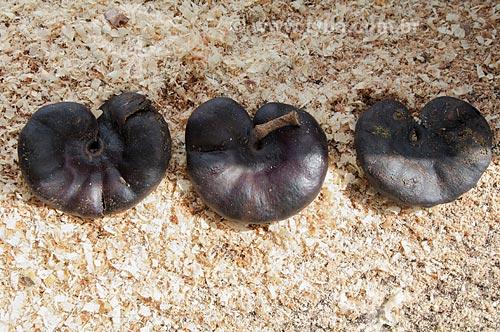 Assunto: Sementes de orelha de macaco - Nome científico Enterolobium contortisiliquum  / Local: Cuiabá - Mato Grosso (MT) - Brasil / Data: 12/2010