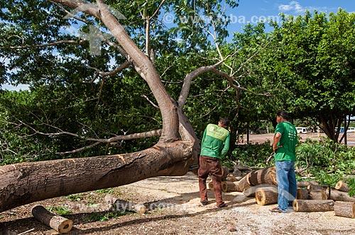 Assunto: Homem cortando árvore para fazer uma Viola de cocho - símbolo da identidade cultural mato-grossense  / Local: Cuiabá - Mato Grosso (MT) - Brasil / Data: 12/2010