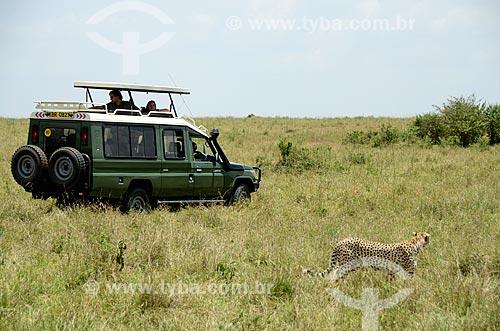 Assunto: Turistas observando Guepardo em safari na savana africana - Reserva Nacional Masai Mara / Local: Vale do Rift - Quênia - África / Data: 09/2012