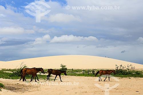 Assunto: Cavalos próximo as dunas do Parque Nacional de Jericoacara / Local: Jijoca de Jericoacoara - Ceará (CE) - Brasil / Data: 03/2014