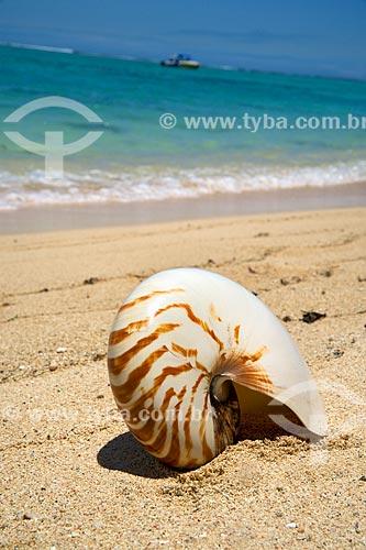 Assunto: Concha na praia da Península Le Morne Brabant / Local: Distrito de Rivière Noire - Maurício - África / Data: 11/2012