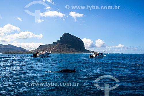 Assunto: Golfinhos se aproximando dos barcos na costa de Maurício / Local: Maurício - África / Data: 11/2012