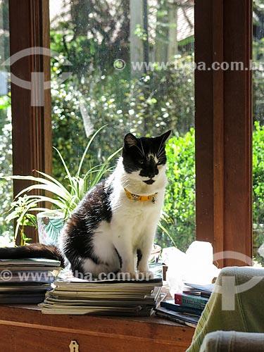 Assunto: Gato tomando sol / Local: Canela - Rio Grande do Sul (RS) - Brasil / Data: 05/2014