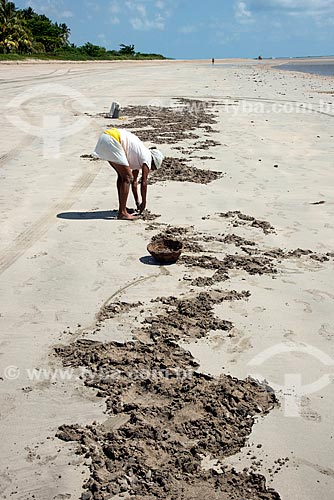 Assunto: Mulher catando mariscos na Praia de Camacho / Local: Maragogi - Alagoas (AL) - Brasil / Data: 12/2013