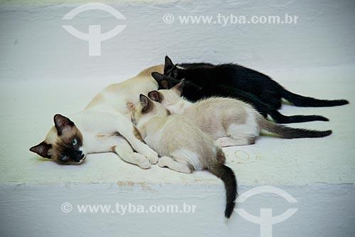 Assunto: Gata amamentando filhotes / Local: Maragogi - Alagoas (AL) - Brasil / Data: 12/2013