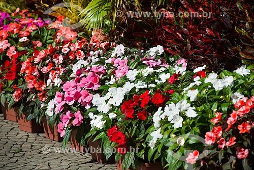 Assunto: Vasos de planta em floricultura no Largo do Machado / Local: Catete - Rio de Janeiro (RJ) - Brasil / Data: 07/2014
