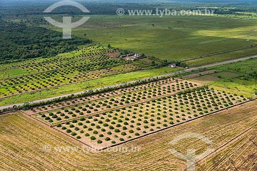 Plantação de arroz e manga na zona rural de Iguape próximo da rodovia estadual SP-222  - Iguape - São Paulo (SP) - Brasil