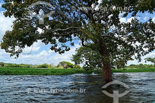 Igarapé do Rio Amazonas  - Parintins - Amazonas (AM) - Brasil