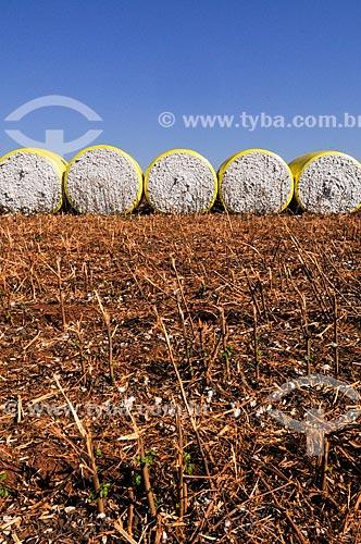 Fardos de algodão prensados por colheitadeiras  - Chapadão do Sul - Mato Grosso do Sul (MS) - Brasil