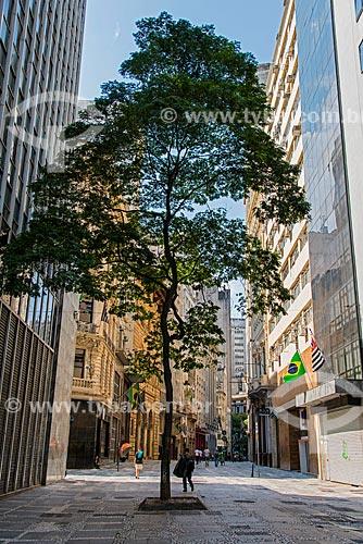 Árvore na Rua XV de novembro  - São Paulo - São Paulo (SP) - Brasil