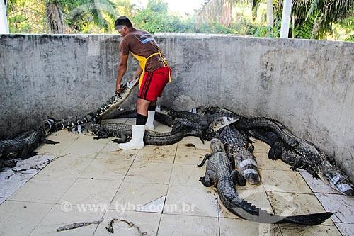 Abate do Jacaré-açu (Melanosuchus niger) na Reserva Extrativista do Lago Cuniã  - Porto Velho - Rondônia (RO) - Brasil