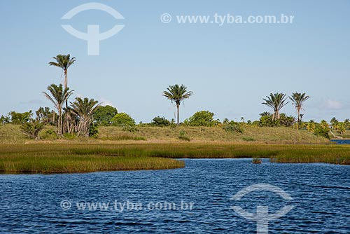 Coqueiros às margens da Lagoa do Cassange  - Maraú - Bahia (BA) - Brasil