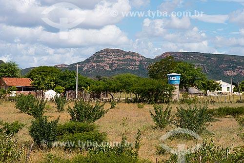 Faveleira (Cnidoscolus quercifolius) - também conhecida como favela, faveleiro ou mandioca-brava - em área de pasto  - Arcoverde - Pernambuco (PE) - Brasil