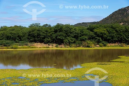 Pequeno açude com Algarobas (Prosopis juliflora) ao fundo  - Salgueiro - Pernambuco (PE) - Brasil