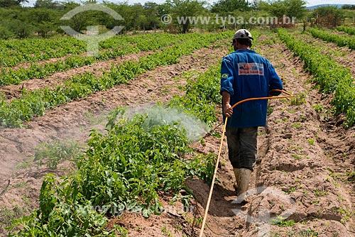 Trabalhador rural aplicando defensivo agrícola sem proteção em plantação de tomate-italiano no Sertão Pernambucano  - Arcoverde - Pernambuco (PE) - Brasil