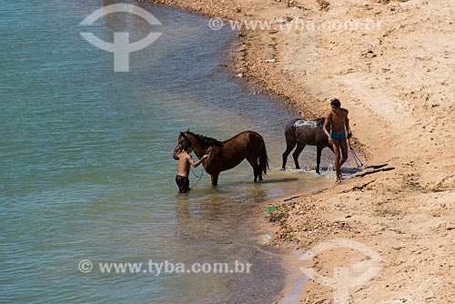 Cavalos tomando banho no Rio São Francisco  - Abaré - Bahia (BA) - Brasil