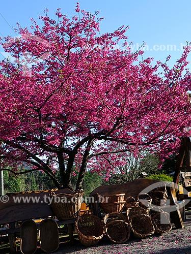 Artesanato em vime sob cerejeira  - Canela - Rio Grande do Sul (RS) - Brasil