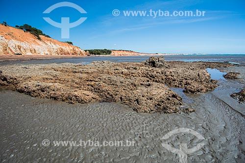 Falésias na orla da Praia de Ponta Grossa  - Icapuí - Ceará (CE) - Brasil