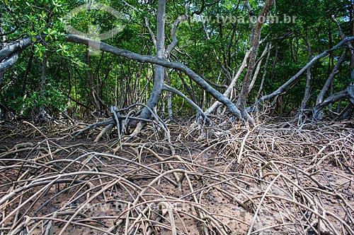 Detalhe de área de mangue no Delta do Parnaíba  - Piauí (PI) - Brasil