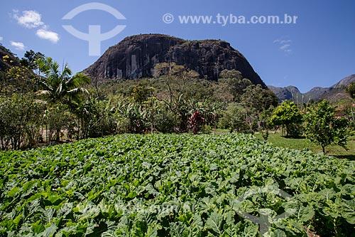 Plantação de couve no Sítio São João (antiga Fazenda Bonfim) - próximo ao Parque Nacional da Serra dos Órgãos  - Petrópolis - Rio de Janeiro (RJ) - Brasil
