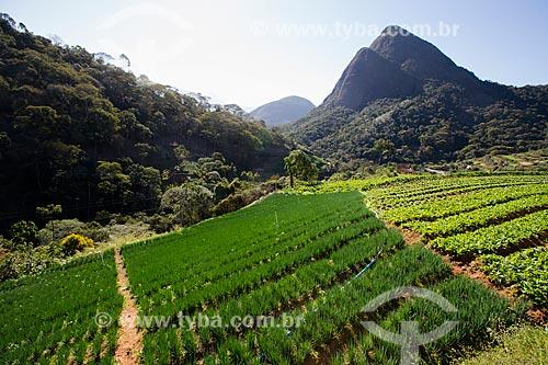 Plantação de cebolinha e rúcula próximo ao Parque Nacional da Serra dos Órgãos  - Petrópolis - Rio de Janeiro (RJ) - Brasil