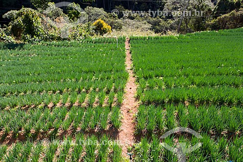 Plantação de cebolinha próximo ao Parque Nacional da Serra dos Órgãos  - Petrópolis - Rio de Janeiro (RJ) - Brasil