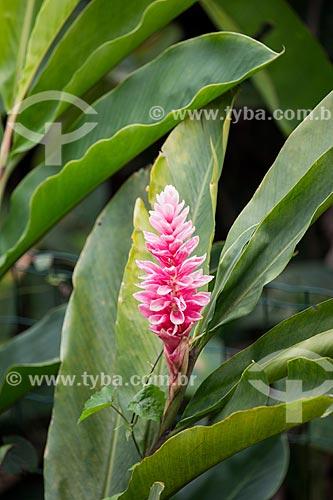 Flor na Fazenda Tucano  - Nova Iguaçu - Rio de Janeiro (RJ) - Brasil