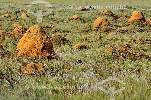 Cupinzeiros no Parque Nacional da Serra da Canastra  - São Roque de Minas - Minas Gerais (MG) - Brasil