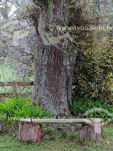Antigo carvalho com banco de madeira  - São Francisco de Paula - Rio Grande do Sul (RS) - Brasil