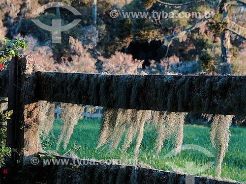 Cerca coberta por musgo  - São Francisco de Paula - Rio Grande do Sul (RS) - Brasil