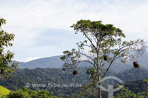 Serra do Tinguá  - Nova Iguaçu - Rio de Janeiro (RJ) - Brasil