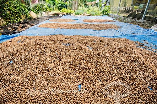 Beneficiamento de semente de içara (Euterpe edulis Martius) - também conhecida como juçara, jiçara ou palmito-juçara - na Área de Proteção Ambiental da Serrinha do Alambari  - Resende - Rio de Janeiro (RJ) - Brasil