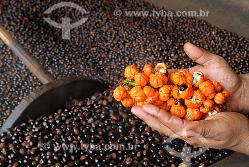 Processo de torrefação das sementes do guaraná (Paullinia cupana) com mão segurando um cacho dos frutos colhidos pelos ribeirinhos  - Maués - Amazonas (AM) - Brasil