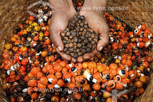 Cestos de palha com frutos do Guaraná (Paullinia cupana) colhidos pelos ribeirinhos com mão segurando sementes torradas  - Maués - Amazonas (AM) - Brasil